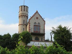 Vineyard outside Osthofen